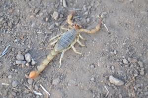 I am Scorpia!