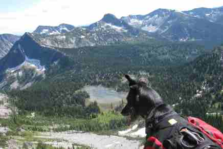 LiveOutThere Exclusive: So you want your dog to be an adventure dog