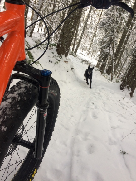 Why you should try fat biking